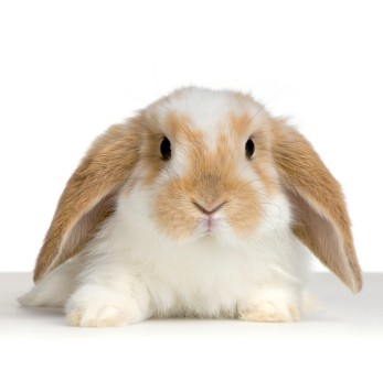 Корма и товары для кроликов