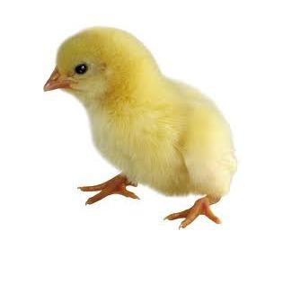 Комбикорм для цыплят Старт Солнышко ПК 5 цена изготовление комбикорма своими руками видео